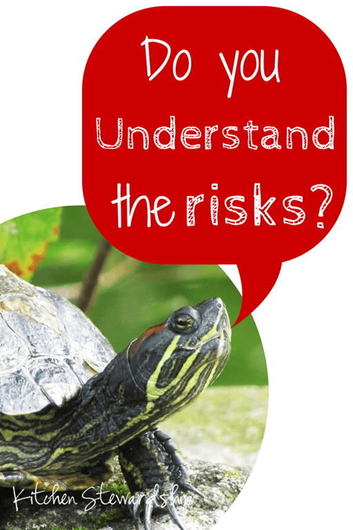 Do you Understand the Risks Turtles Salmonella and Young Children