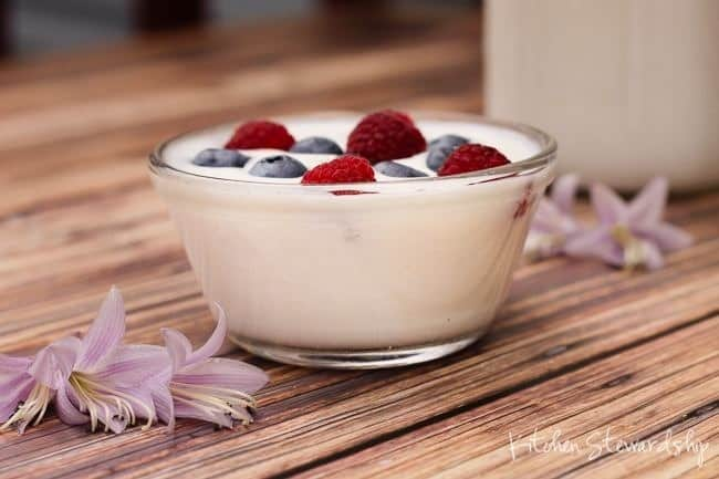Homemade Yogurt made from Commercial Yogurt Cultures