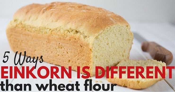 5 Ways Eikorn is Different From Wheat Flour
