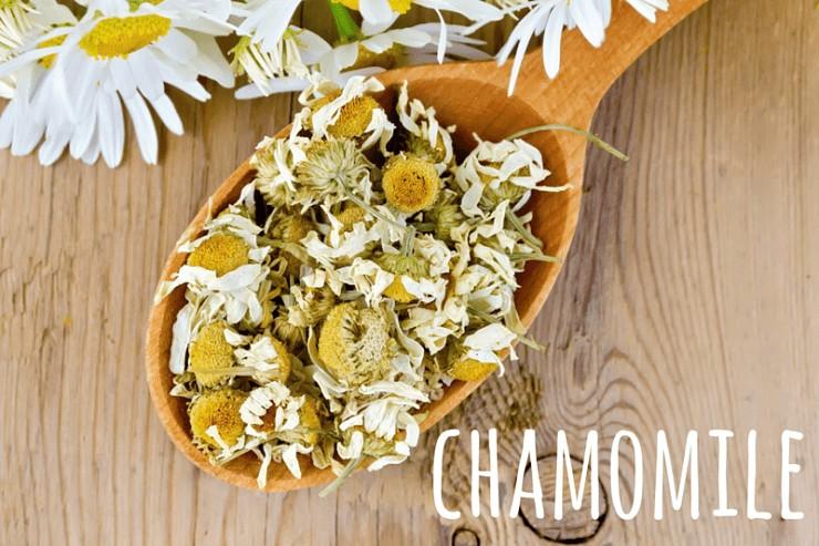 chamomile tea herb