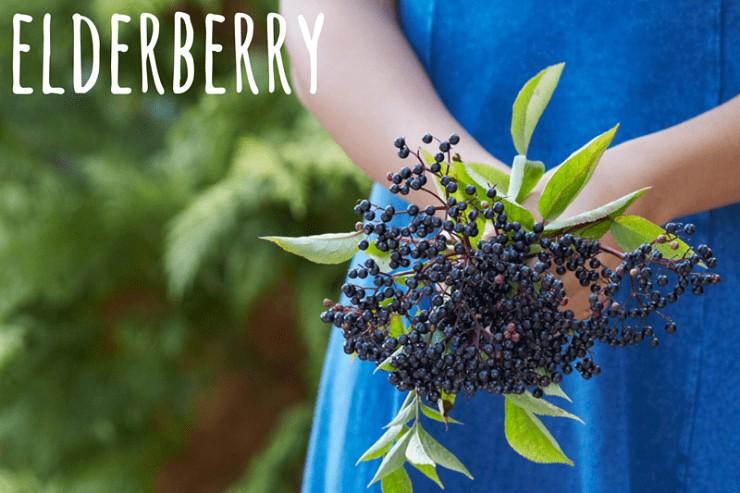 elderberry winter herb