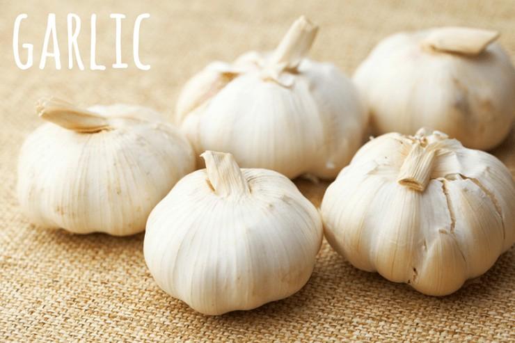 garlic herb for winter