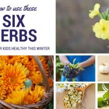 6 Must-Have Herbs to Keep Your Kids Healthy This Winter {GUEST POST}
