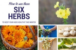 Learn how to use these six safe and effective herbs to keep your kids healthy through the long winter. They are so gentle they should be your first line of defense.