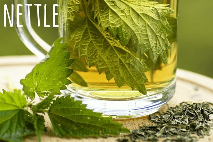 nettle winter herb