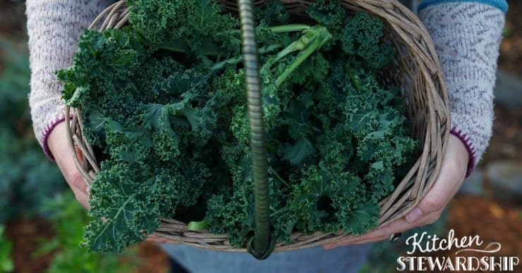 Basket of kale