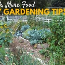 Lazy Gardening 101: 8 Tips to Grow Your Own Food with The Least Amount of Effort