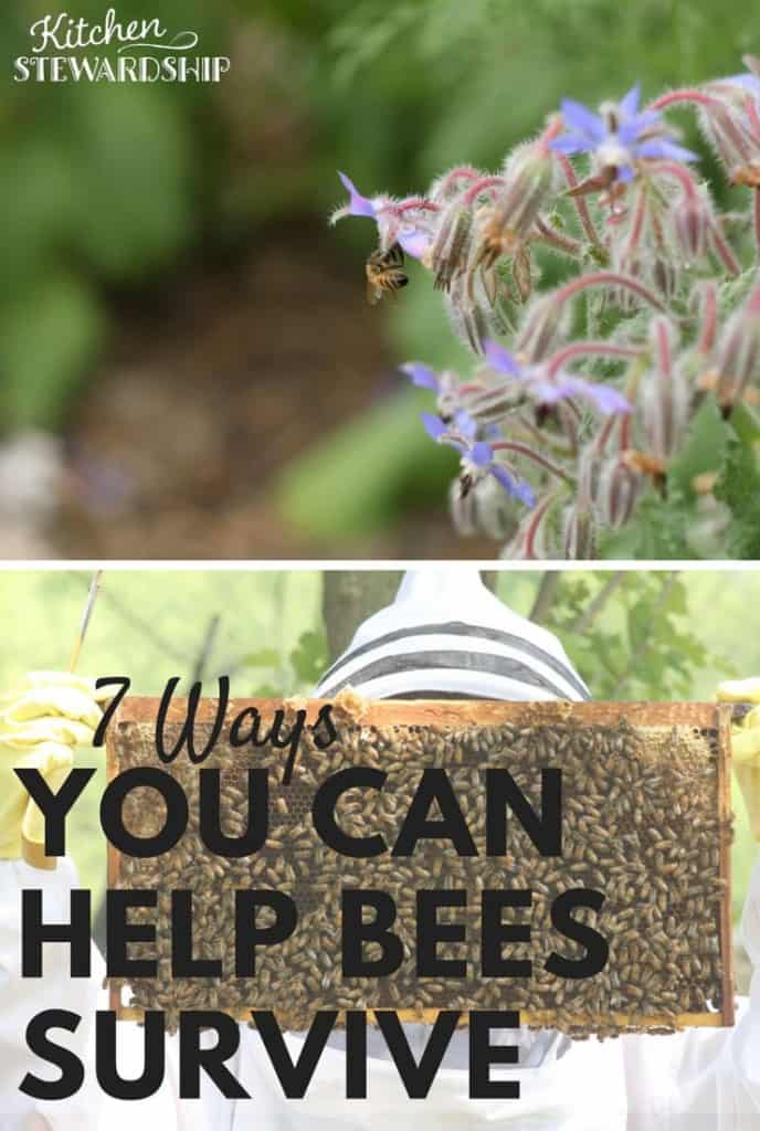 7 Ways You Can Help Bees Survive