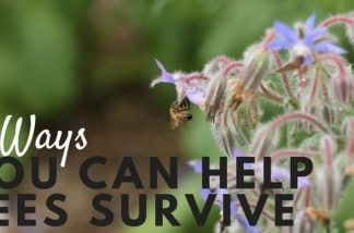 7 Ways YOU Can Help the Bee Population Survive!