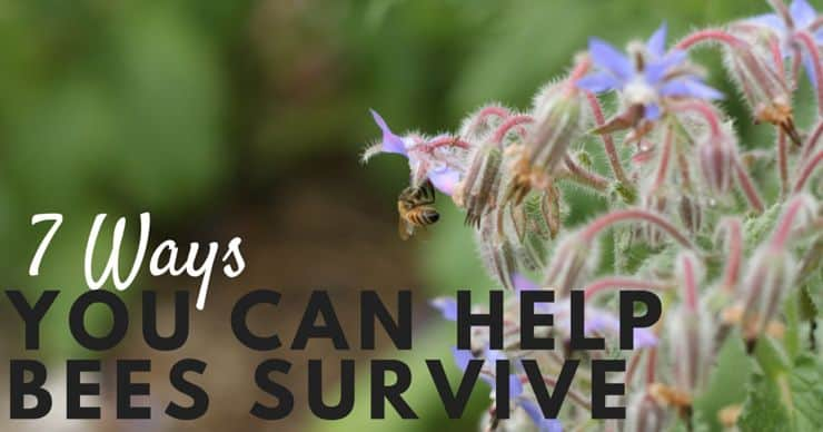 7 Ways You Can Help Bees Survive FB