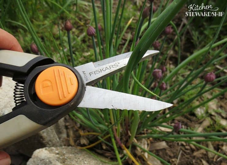 Easily Collect Herbs with Fiskers Snippers