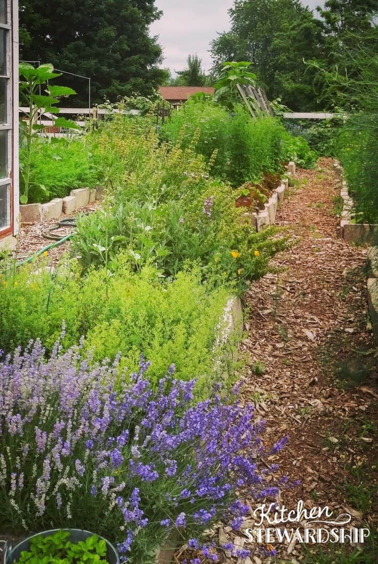 Make effortless gardening a reality back to eden garden make effortless gardening a reality fandeluxe Images
