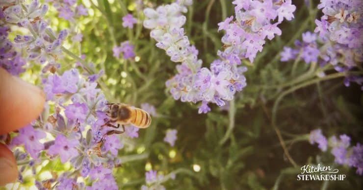 Tips for a successful garden-flowers to attract bees