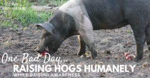Raising hogs humanely - doing our part to give animals the best life