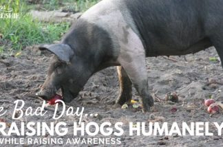 One Bad Day – Why We Need to Raise Animals Humanely