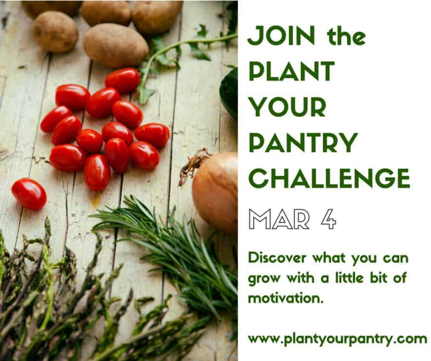 Plant your pantry challenge