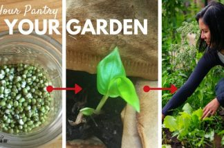 How do you start a garden without really trying? Plant Your Pantry!