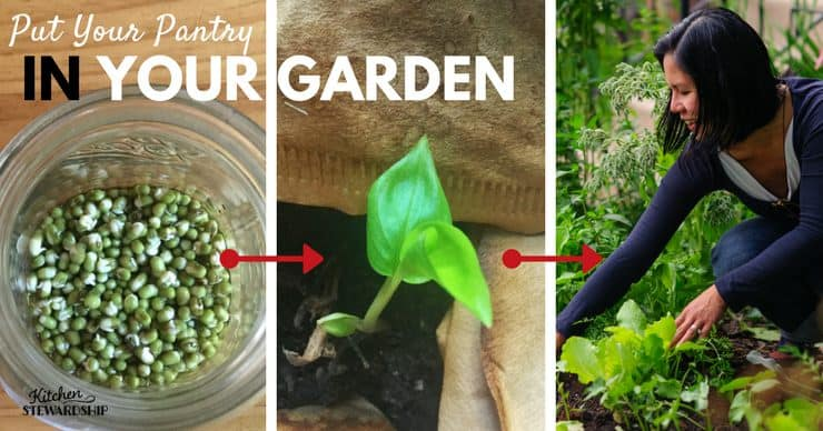 Put Your Pantry in your garden