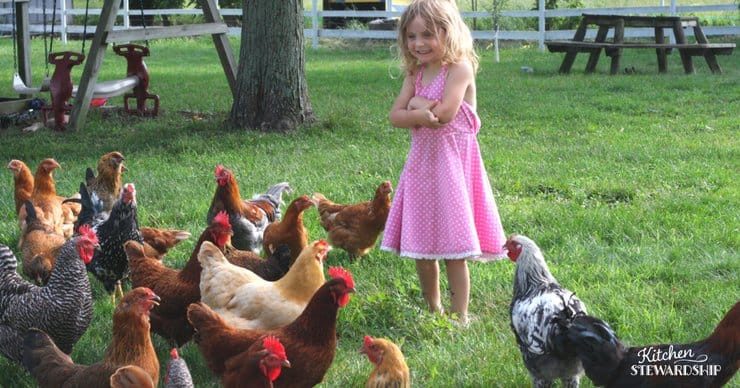 Want Backyard Chickens? Here Are 3 Things You Need to Know