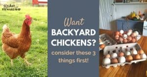 Raising chickens at home. What you need to know before getting started. From a farmer who loves her chickens.