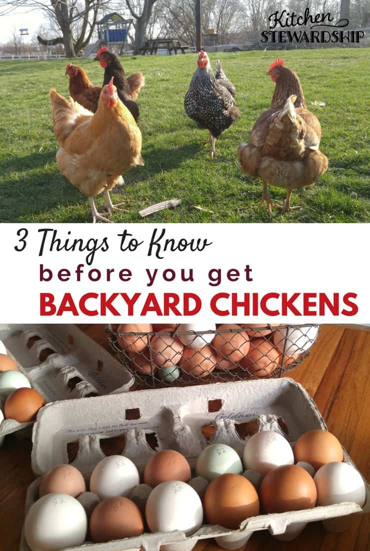 Guide and tips for getting backyard chickens from someone who has and loves them!