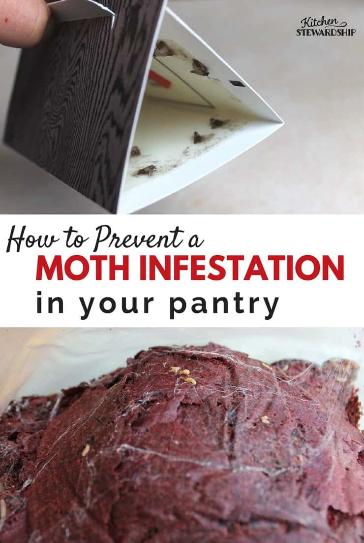 How to prevent and clean up from moth infestation in your pantry. It can happen to anyone!