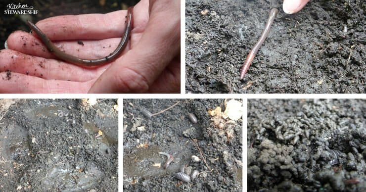 Using compost in your garden. You will find plenty of worms and rolly pollys in your compost when transferring to your garden.
