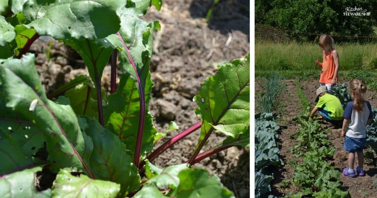 How to use beets and why you should garden