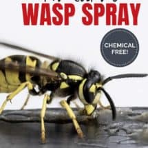 Natural Wasp Spray: We Got Rid of our Wasps, No Raid Required!
