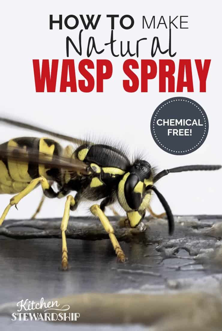 Natural wasp spray, how to get rid of wasps