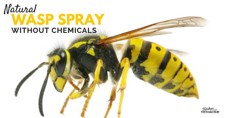 Natural Wasp Spray without chemcials