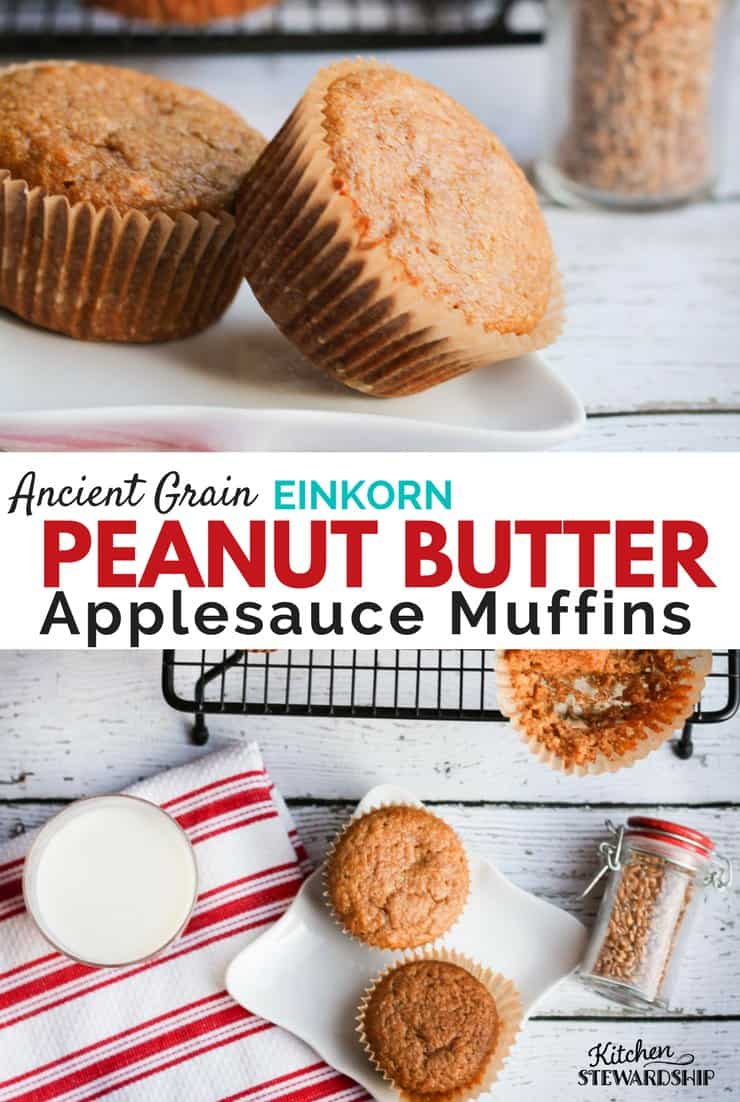 Freshly baked Einkorn peanut butter applesauce muffins on a plate.