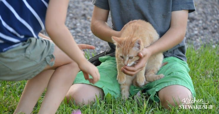 Kids playing with a farm cat.