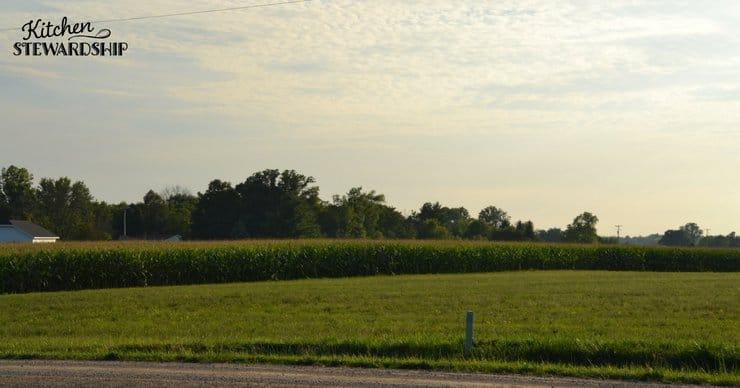 Field of crops.