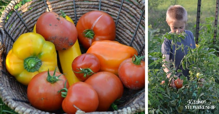 Fresh garden veggies and a boy in the garden