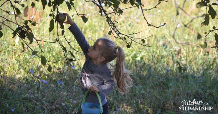 toddler girl picking apples
