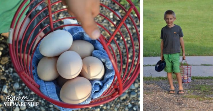 boy helping collect eggs on the farm