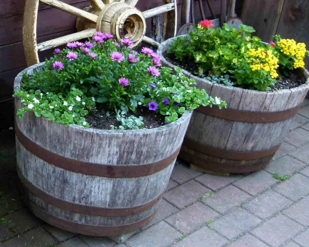 Half-Barrel Container Gardens