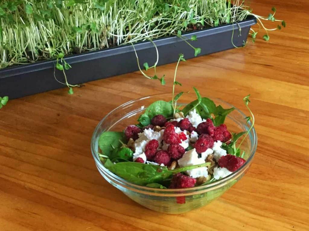 Microgreens and salad