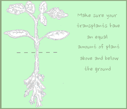 Graphic of a plant's root system