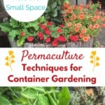 Gardening Permaculture Techniques for Containers