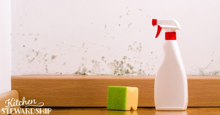 sponge and spray cleaner near moldy wall