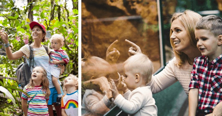 kids and moms having fun at the zoo
