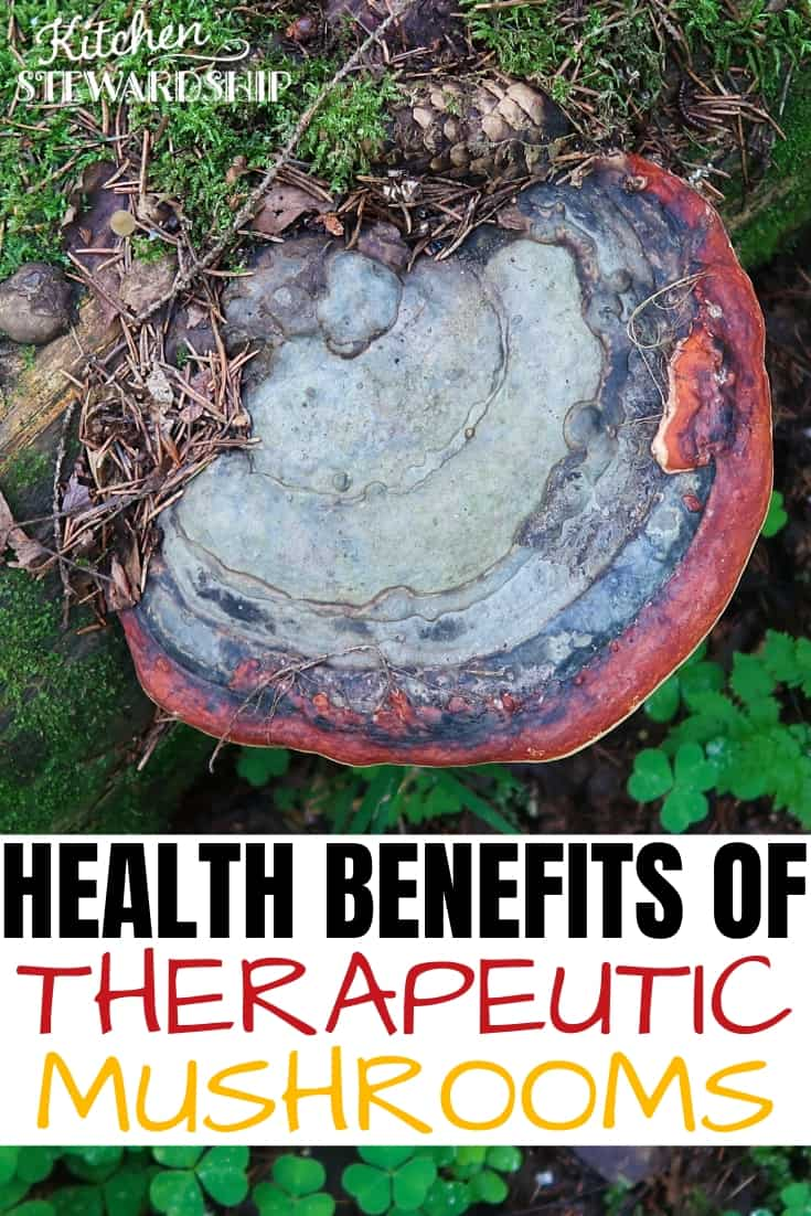 Health benefits of therapeutic mushrooms