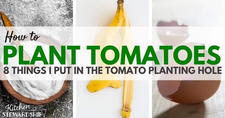 tomato fertilizer items