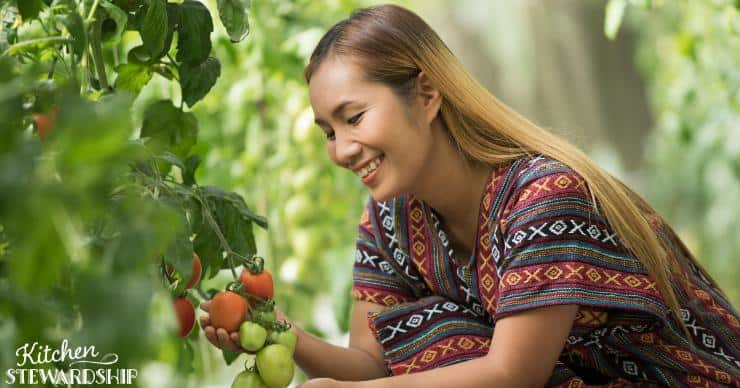 woman in tomato garden