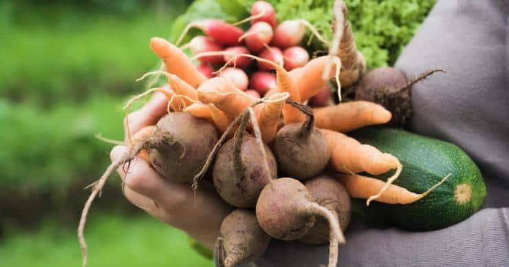 woman carrying an armful of freshly picked garden veggies