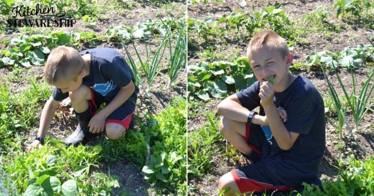kid eating lettuce in garden