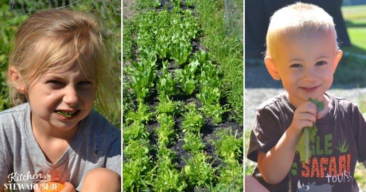 kids eating lettuce in the garden