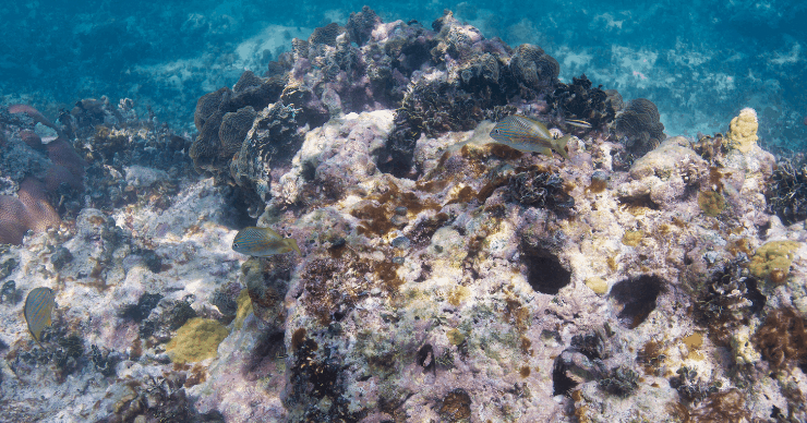 coral reefs dying